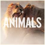 Animals (Cd Single) Maroon 5