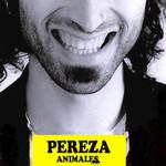 Animales Pereza
