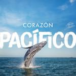 Corazon Pacifico (Cd Single) Herencia De Timbiqui