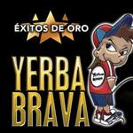 Exitos De Oro Yerba Brava