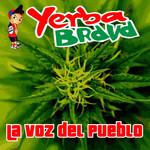 La Voz Del Pueblo Yerba Brava