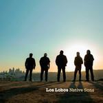 Native Sons Los Lobos
