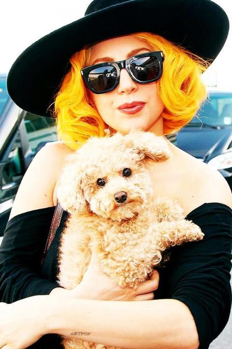 Foto de Lady Gaga  número 39433